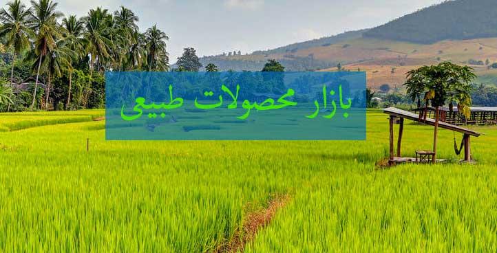 پخش برنج شمال