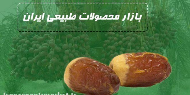 فروش عمده خرما در رشت