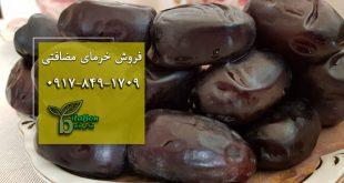 خرمای مضافتی ایرانشهر