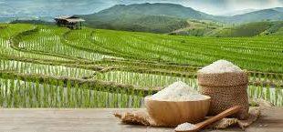 تامین کننده برنج